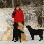Labradorai ir lygiaplaukiai ir auksaspalviai retriveriai is Retriveriu Veislyno Basteta