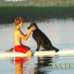 Auksaspalvių retriverių Labradorų retriverių lygiaplaukių retriverių veislynas BASTETA